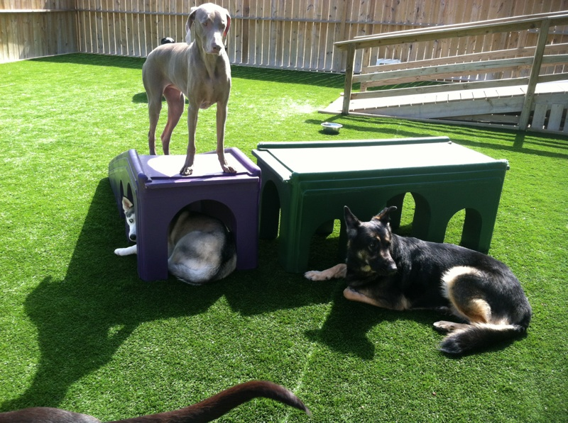 Image of Play All Day Doggie Daycare and Hotel which provides dog boarding in or near East Peoria, IL