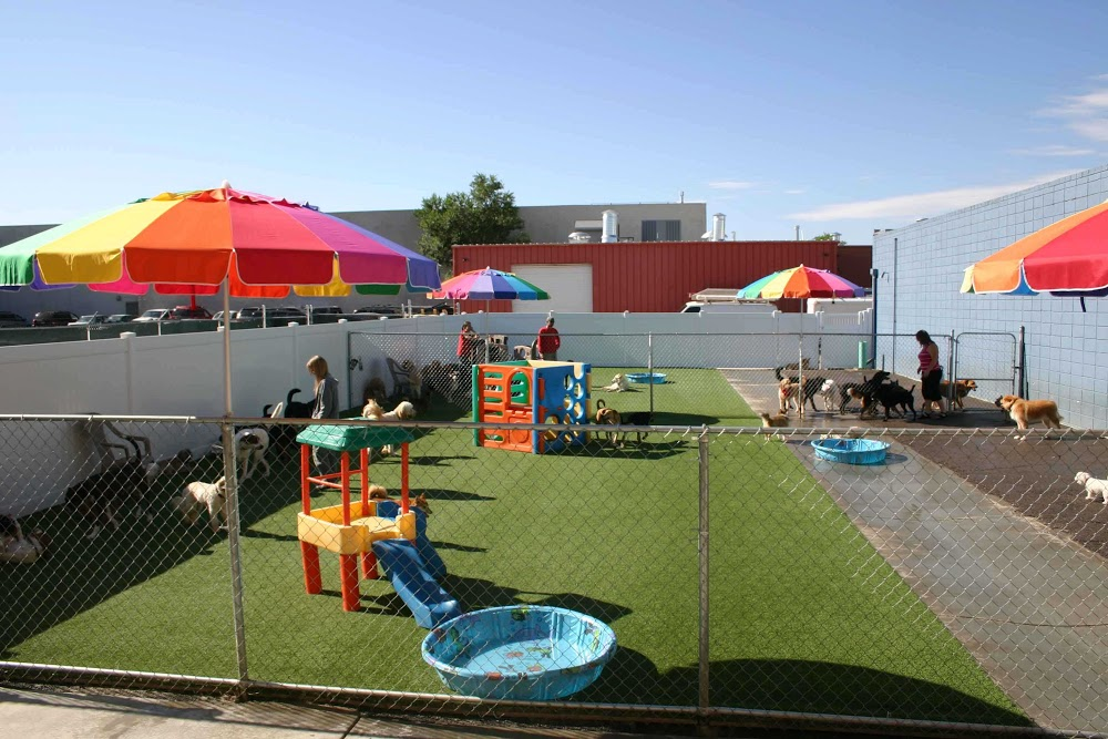 Image of Playful Pooch Dog Daycare and Boarding which provides dog boarding in or near Denver, CO
