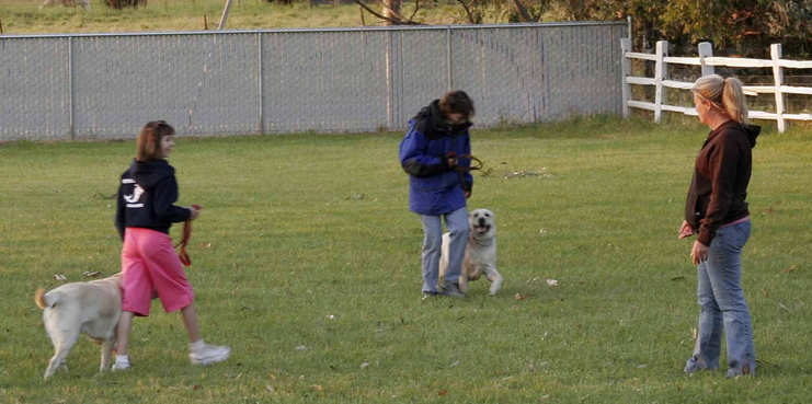 Image of Big Basin Dog Training which provides dog boarding in or near Modesto, CA