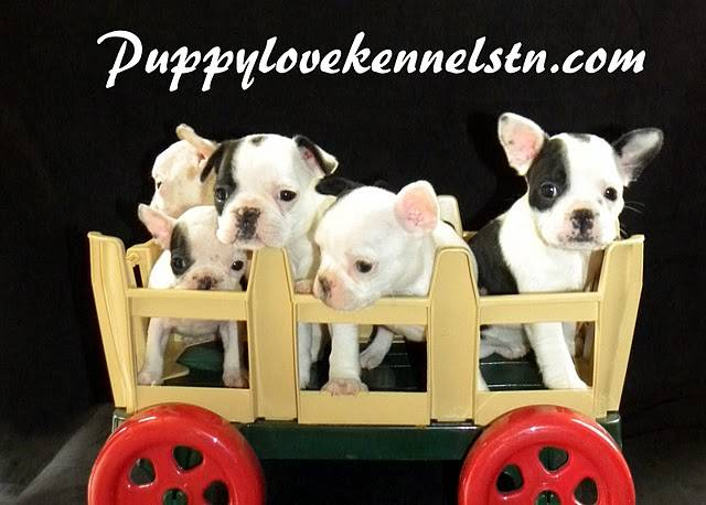 Image of PUPPY LOVE KENNELS which provides dog boarding in or near Limestone, TN