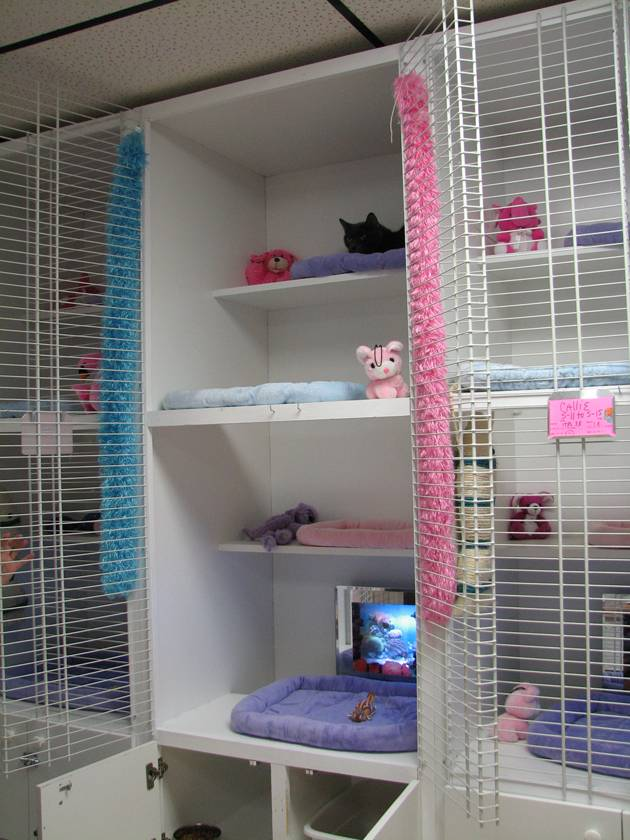 Image of The Smitten Kitten Cat Resort & Spa which provides dog boarding in or near Brooksville, FL