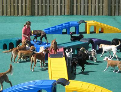 Image of Barkefellers which provides dog boarding in or near Indianapolis, IN