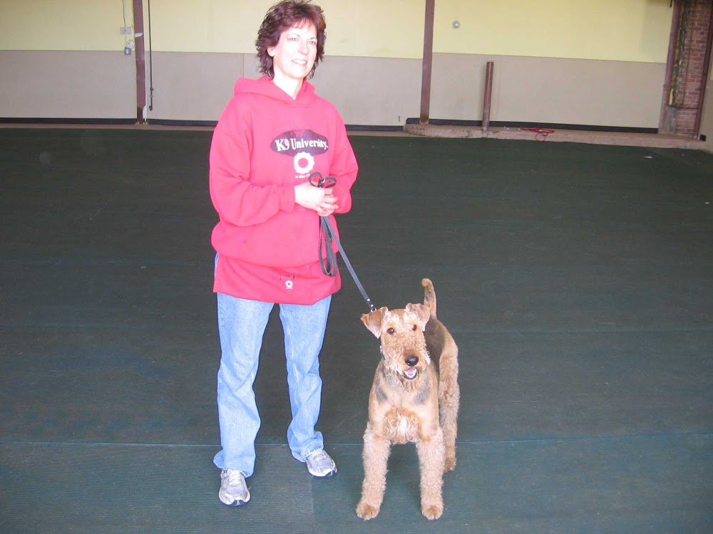 Image of K9 University which provides dog boarding in or near Chicago, IL