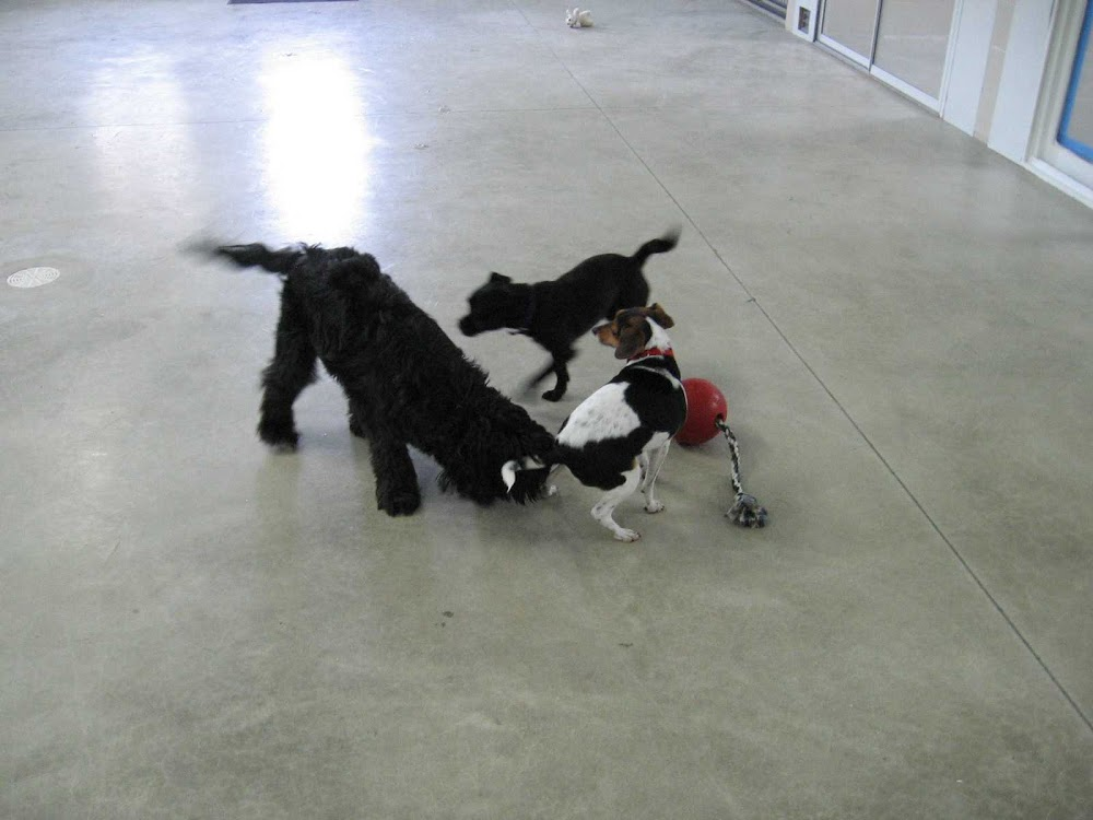 Image of Stay and Play Pet Resort which provides dog boarding in or near Pequot Lakes, MN
