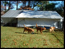 Image of Briarwood Kennel which provides dog boarding in or near Hanover, MA